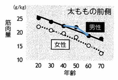 太もも前側の筋肉量推移グラフ