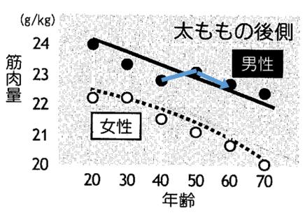 太もも後側の筋肉量推移グラフ